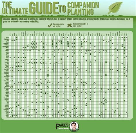 the ultimate guide to companion planting home and