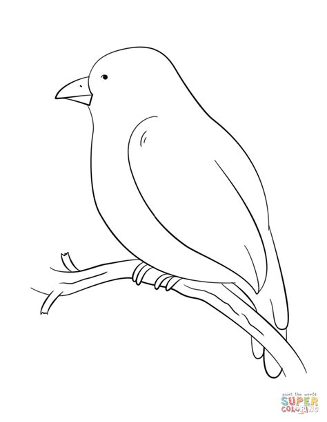 tody bird coloring page branch coloring download branch coloring