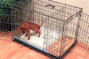 leaving puppy in crate while at work bundaberg south vet clinic toilet your puppy