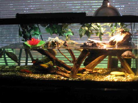 aquarium design for turtles amazon water turtles tanks turtle terrarium ideas yugi