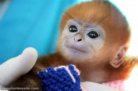 cute monkey pictures, cute baby monkeys   tedlillyfanclub