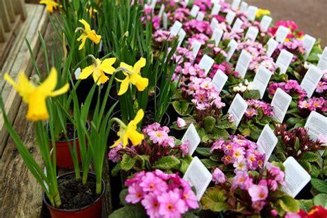 vendita online piante vendita online piante fiori per cerimonie piante
