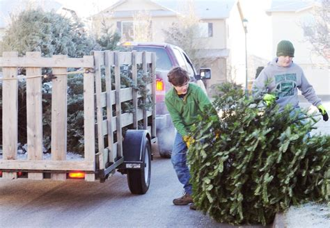 boy scouts start new year with christmas tree pickup all