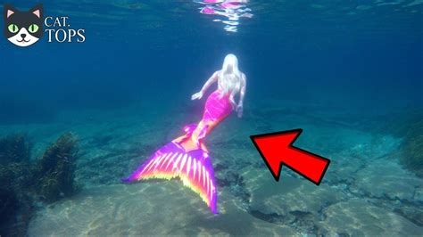 imagenes y videos de sirenas reales 7 sirenas reales captadas en camara youtube