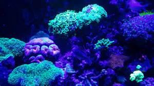 120 Gallon Mixed Marine Coral Reef Aquarium Fish Tank Saltwater March