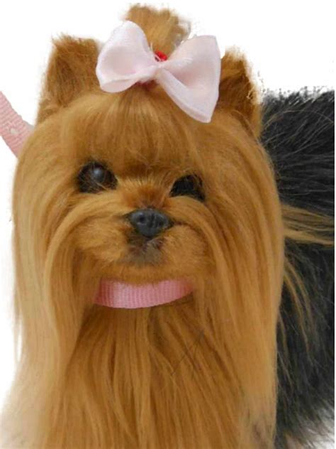 yorkies as pets pet yorkie puppy duchess outlet