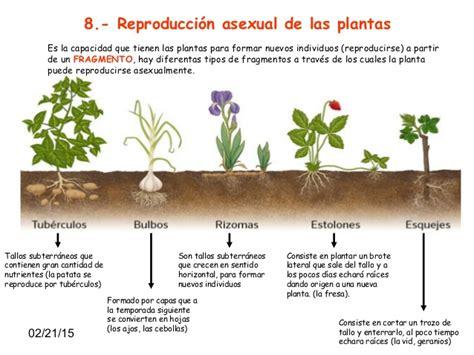 imagenes de flores que se reproducen asexualmente tema 5 quot las plantas quot