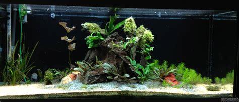 Folie Aquarium Kleben by Eur 5 75 Quadratmeter Aquarium Terrarium R 252 Ckwandfolie