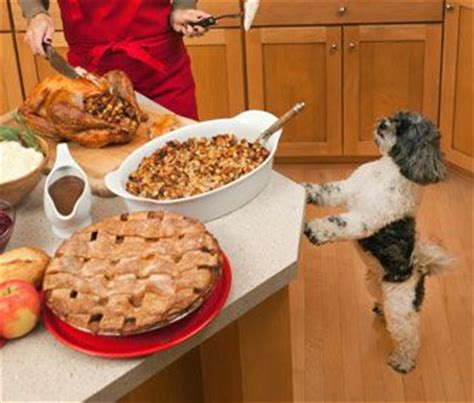 can dogs turkey bones are turkey bones safe for dogs dr marty becker explains the dangers of giving your