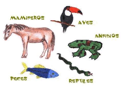imagenes de animales vertebrados wikipedia videos educativos los animales vertebrados