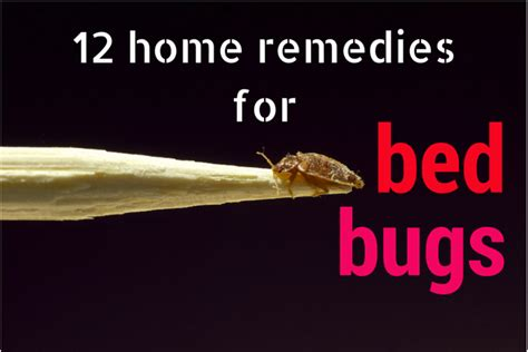 Bed Bug Home Remedy by Bed Bug Home Remedies Q A