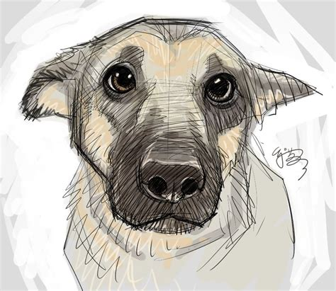Drawing Dogs by Pin By Julie Durant On Sketchy Drawings