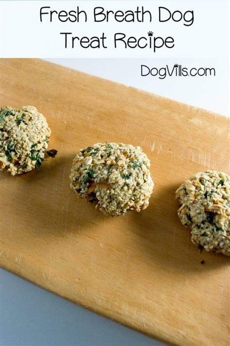 how to freshen dogs breath healthy diy treat recipes the quench