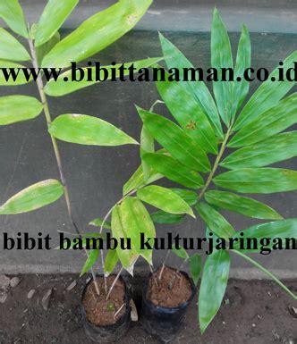 Bibit Durian Bawor Kediri pusat bibit pohon bambu petung murah unggul di jawa