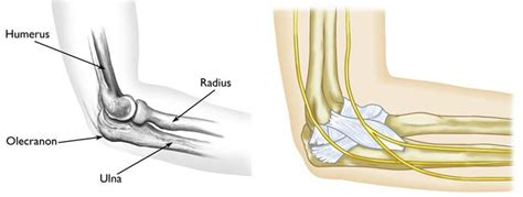 hitting nerve in elbow elbow olecranon fractures orthoinfo aaos