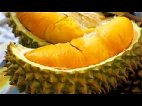 mantap makan durian musang king  penang malaysia youtube