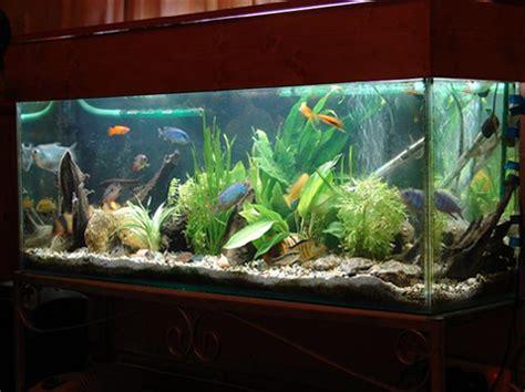 home fish tank