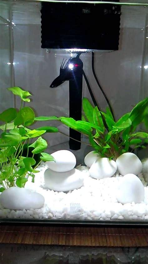 fluval chi aquascape 25 best ideas about betta tank on pinterest betta