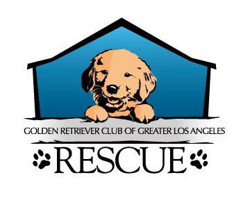 golden retriever rescue of greater los angeles golden retriever club of greater los angeles rescue