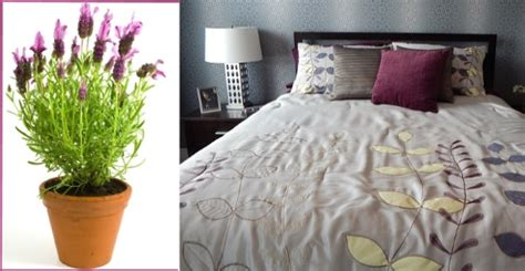plants to have in bedroom the 10 best plants to have in your bedroom