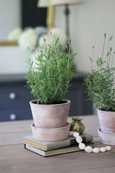 white washing terra cotta pots tips  growing lavender