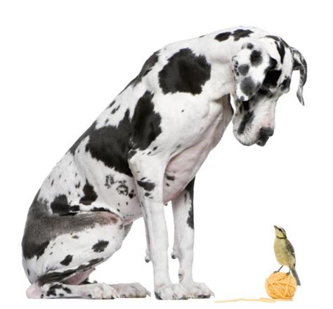 dogs that bark the least top 10 breeds that bark the least onehowto