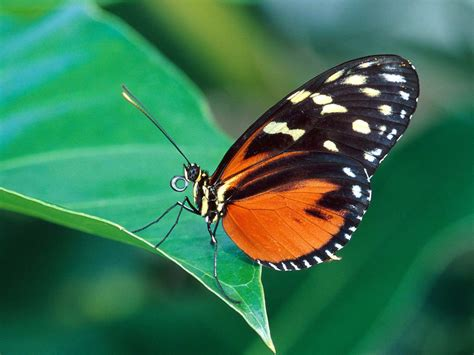 wallpaper for desktop butterfly wallpaperswide9 blogspot com free hd desktop wallpapers