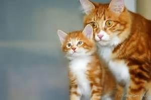 красивые картинки кошки обои