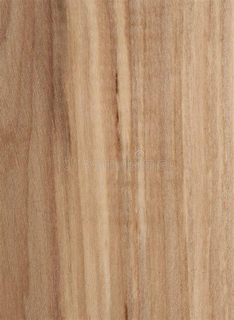 rowan tree texture stock photo image  background