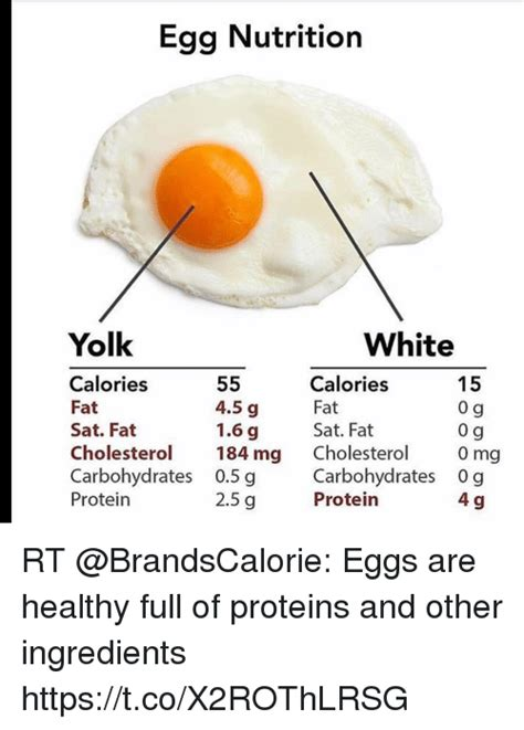 protein 0 cholesterol 25 best memes about yolk yolk memes