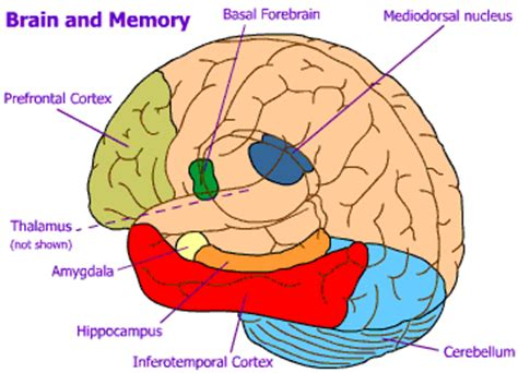 memory section of the brain how do people crack sudoku quora