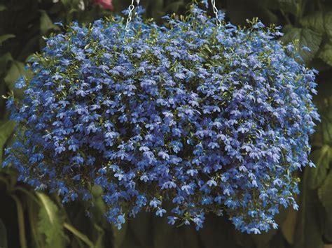 piante da giardino ombra piante da ombra guida completa per un giardino fiorito