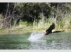 Tyee Lake Lodge (Mcleese Lake, British Columbia) - Resort ... Guest Wifi Solutions
