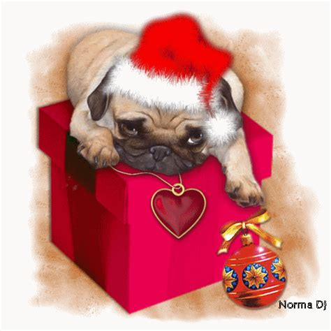 christmas pug pictures   images  facebook tumblr pinterest  twitter