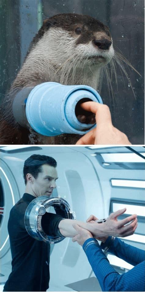 Cumberbatch Otter Meme - best 20 otter meme ideas on pinterest