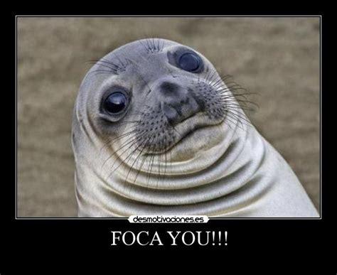 imagenes de focas blancas foca you desmotivaciones