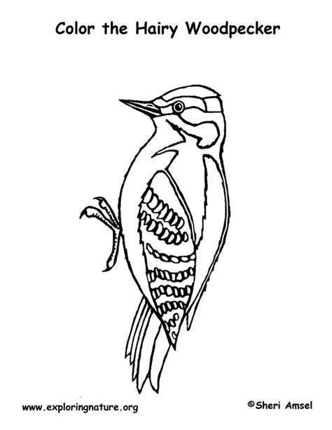 wood coloring coloring pages