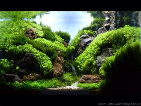 Mountain Aquascape by Great Mountain Valley Type Aquascape Freshwater Aquaria