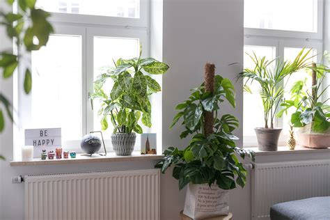 fensterbrett pflanzen pflanzen fensterbank wohnzimmer goetics