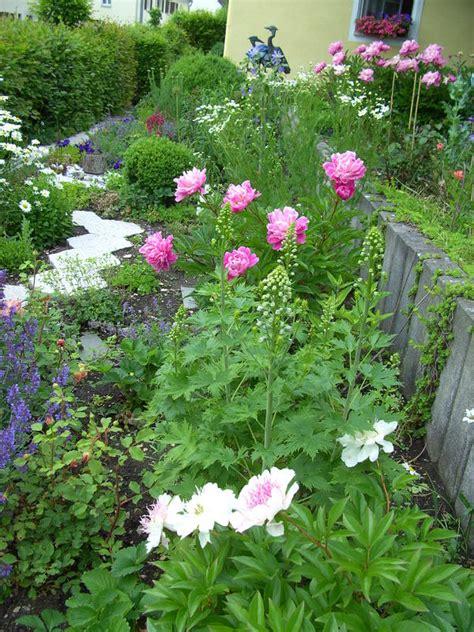 Pflanzen Im Garten Umsetzen by Pfingstrose Umsetzen Seite 2 Garten Gartenforum De
