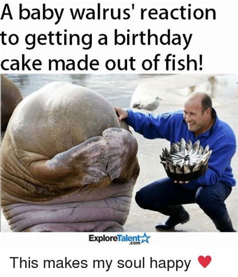 Walrus Meme - a baby walrus reaction to getting a birthday cake made out of fish explore talen com this