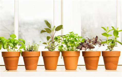 Window Sill Planter Indoor by 10 Herbs To Grow Inside Year Round Rodale S Organic Life