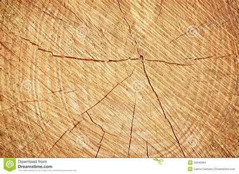 cutting down a tree in sections cut tree stock images image 34545684