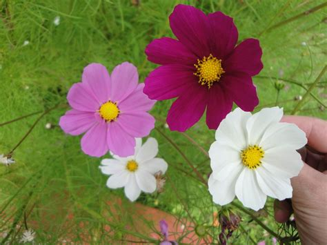 imagenes de flores silvestres chilenas poemas del r 237 o wang flores de para chile