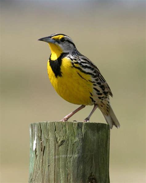 bird identification animal biology 366 with stewart at