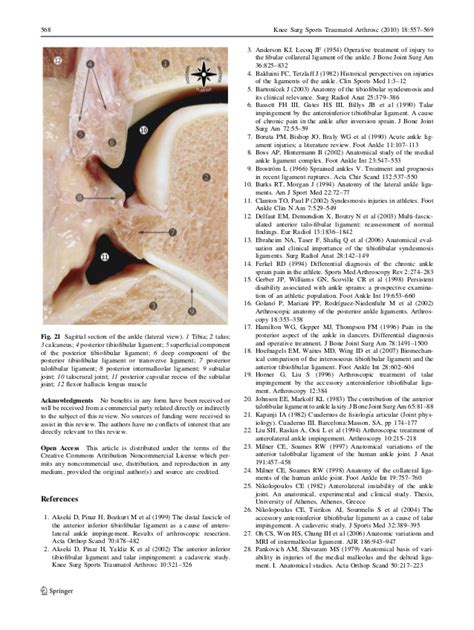 Pictorial Essay About by Anatomy Of The Ankle Ligaments A Pictorial Essay