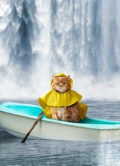 boat horn funny 1000 images about cat costumes on pinterest cute animal