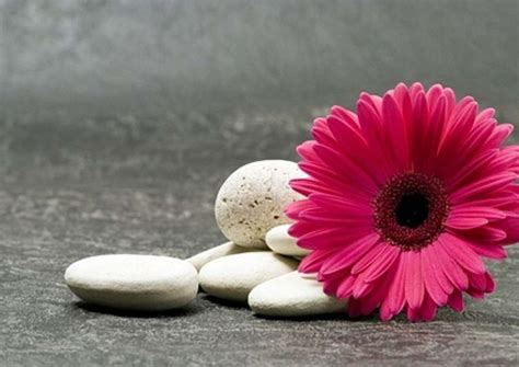 pink gerbera wallpapers http wallpapers ae pink gerbera