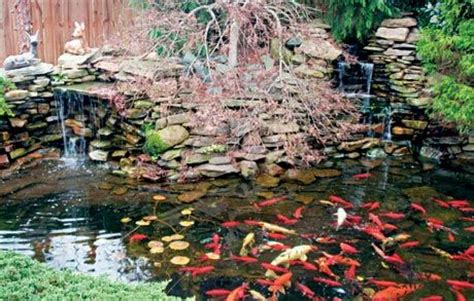 diy build a small pond in your backyard my classroom