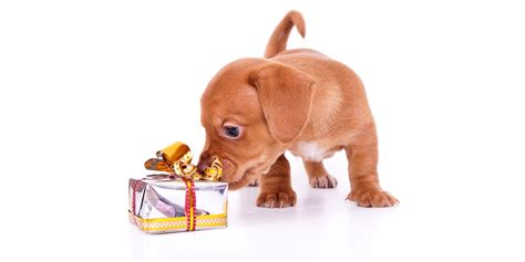 pet technologies to present an innovative blower company news techlife today christmas gift ideas for your dog